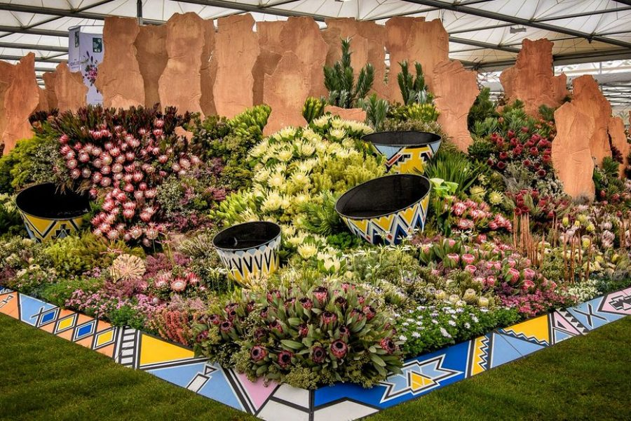 ANOTHER GOLD FOR KIRSTENBOSCH AT CHELSEA FLOWER SHOW!