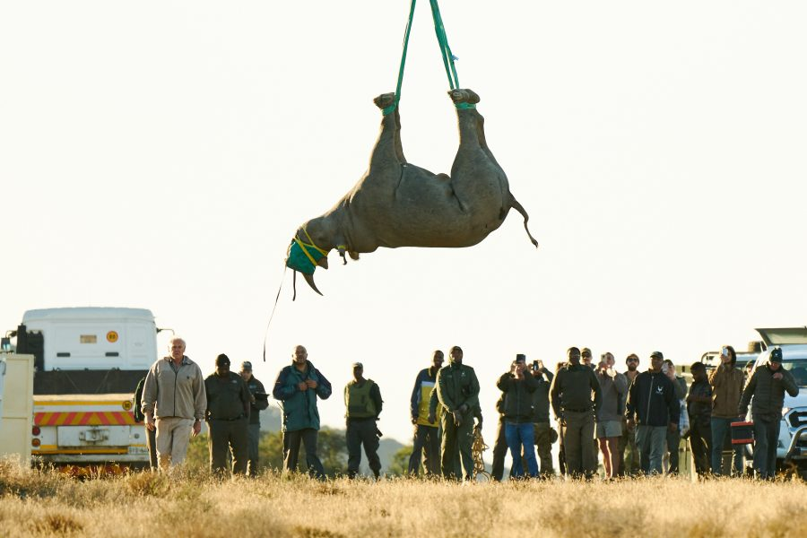 ANOTHER BLACK RHINO SUCCESSFULLY TRANSLOCATED