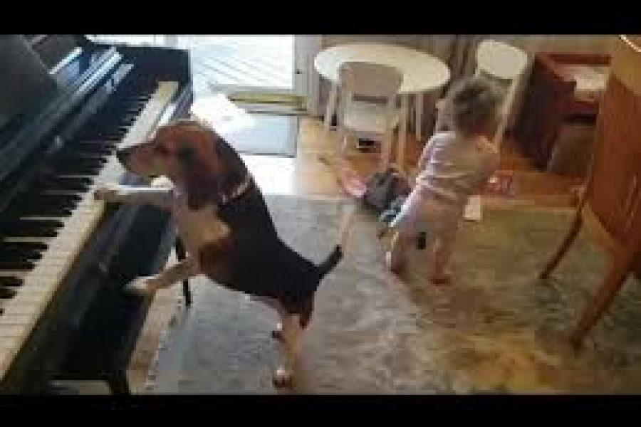 What's Going Viral: A Dog Playing the Piano, whilst the Toddler Dances