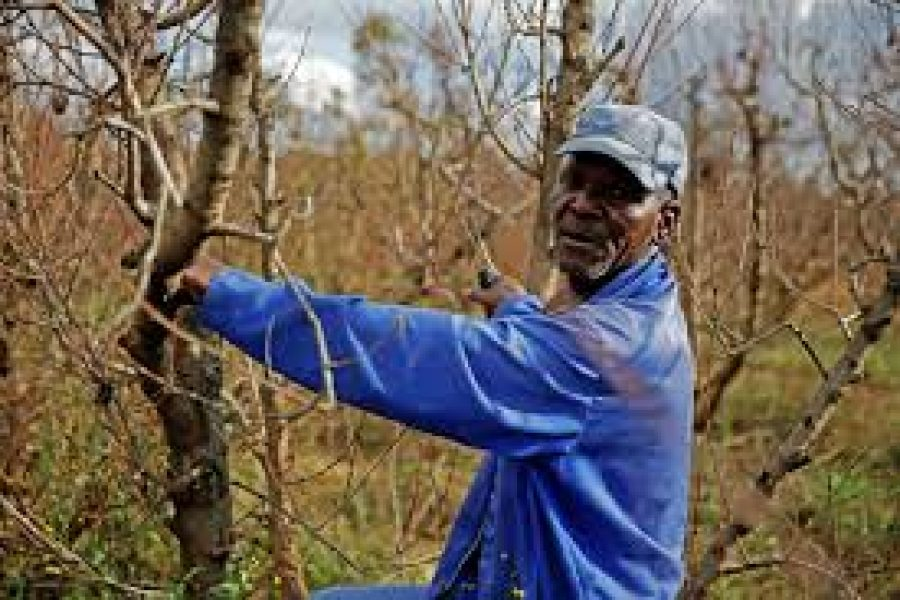The Honest Truth: Vulnerable and marginalised South African farm workers' future hanging in the balance