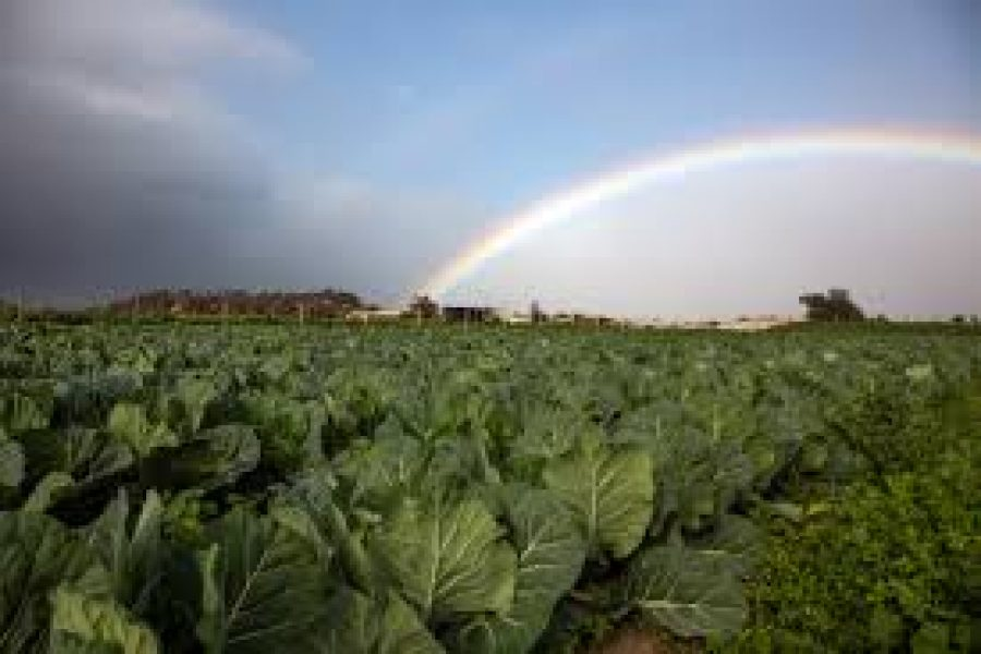 The Honest Truth: The Philippi Horticultural Area, which provides 50% of the city's fresh produce, is fighting a court battle to conserve its fertile farmlands