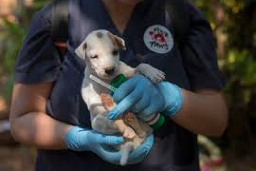 The Honest Truth: Don't let a bite end a life: Join the global fight against rabies and vaccinate