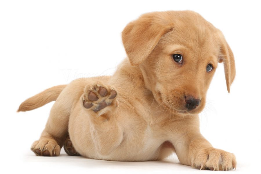 What's Going Viral: The Power of a Puppy