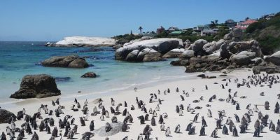 S.A.N.Parks: Silvermine Gate 1, Boulders and the picnic-sites at Oudekraal and Newlands re-opens!