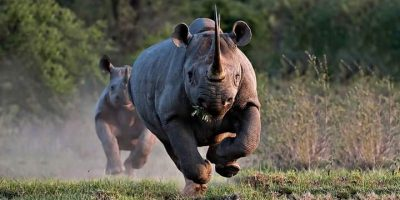 Listen: 7 Integrated Wildlife Zones launched to protect Rhinos