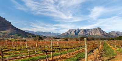 Listen: S.A. winemakers stuck with millions of litres of excess wine!