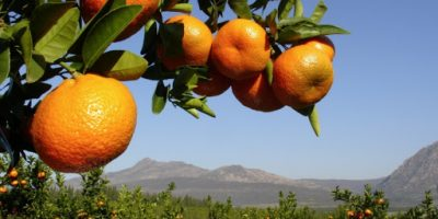Listen: S.A. Records Record Citrus-Exports in 2020