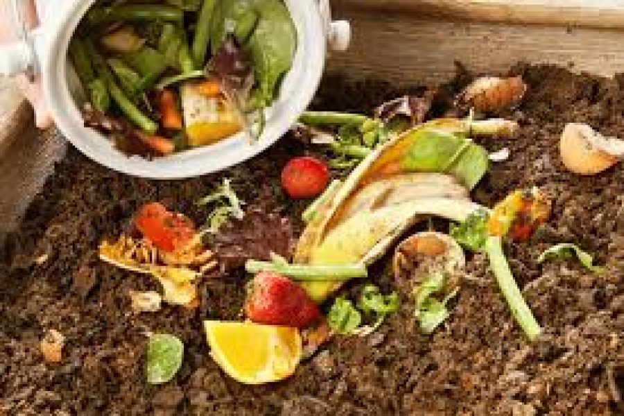 Public invited to participate in City's Food Waste Diversion project
