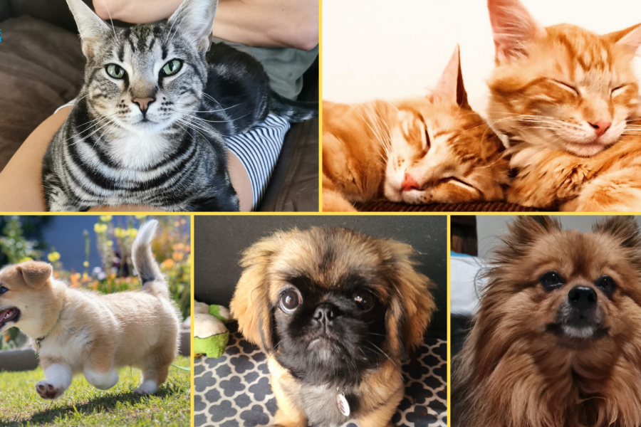 [LISTEN] Your Cute Pets and Their Creative Names