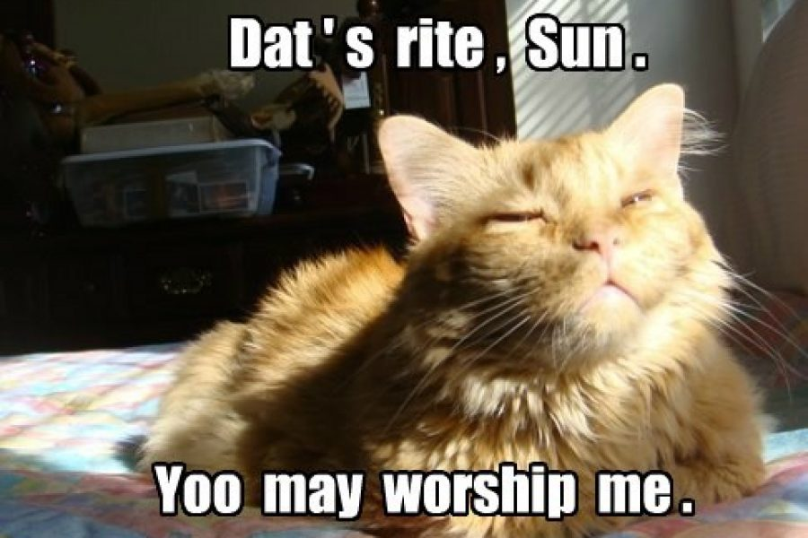 [LISTEN] Baffled By The Bunch – The Ancient Egyptian Word For Cat Is…